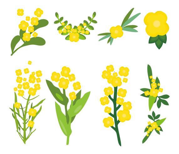 菜の花アイコン 画像素材集ダウンロード美麗デザイン背景 イラスト