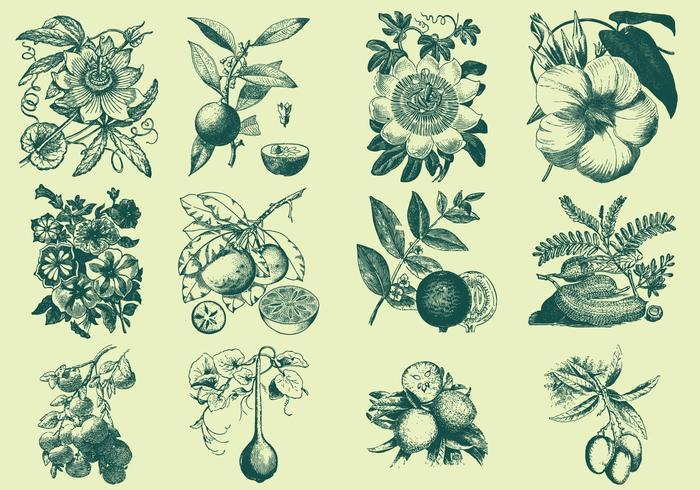 緑の果実と花パターン素材集ダウンロード
