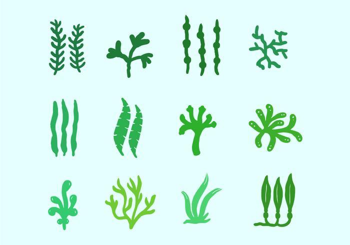 海の植物と海藻イラスト素材無料ダウンロード精巧な画像ファイル素材