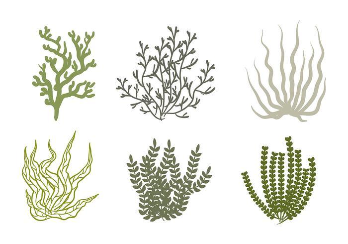 【海苔向量素材】可商业用的海苔向量素材下载,推荐的透明PNG免费下载