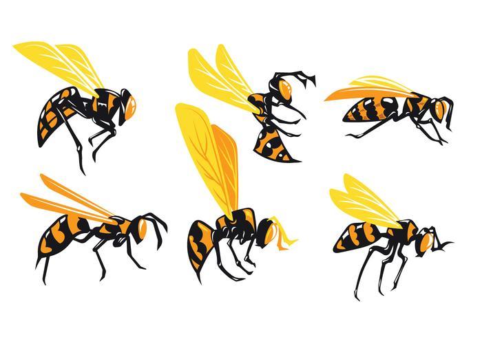大黃蜂孤立在白色圖片素材免費下載