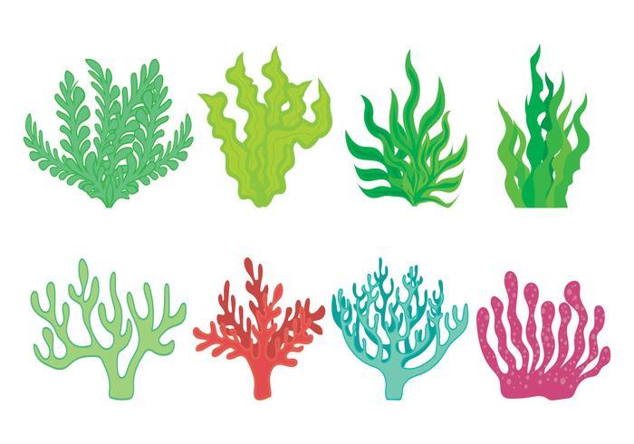 【海苔图片】丰富的海苔图片下载,完善的卡通图案下载